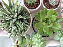 Gardening for Beginners Plus House Plants, Succulents, & Herbs - Product Image