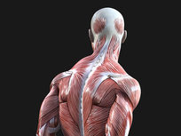 Medical Terminology of the Muscular System - Product Image