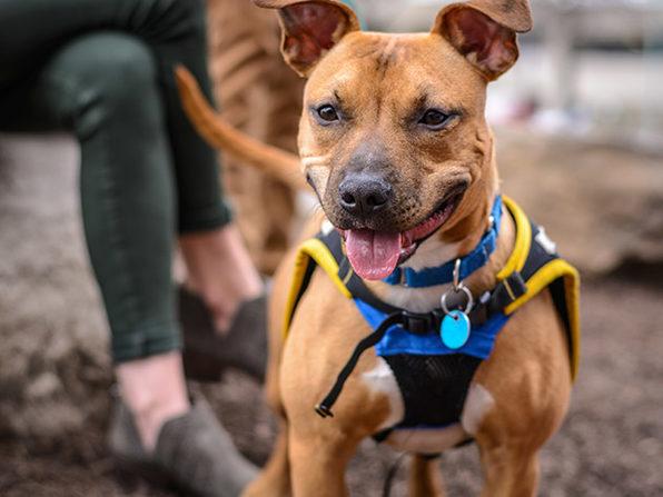 Dog Training Essentials Course