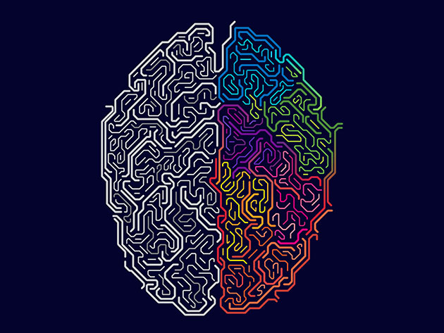 Master Your Brain: Neuroscience For Personal Development