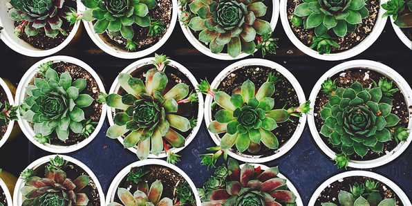 Gardening for Beginners: House Plants, Succulents, & Herbs - Product Image