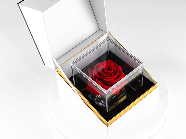 Suóno: Forever Rose with Personalized Audio Message, on sale for $64.95 (reg. $79)