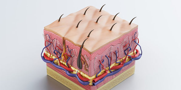 Medical Terminology of the Integumentary System - Product Image
