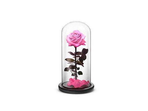 Pink Everlasting Rose (Large)