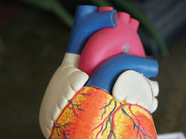 Medical Terminology of the Cardiovascular System: Part 1 - Product Image