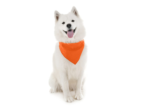 Qraftsy Dog Bandana Scarf Triangle Bibs for Any Size Puppies, Dogs and Cats - Orange