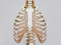 Medical Terminology of the Skeletal System - Product Image