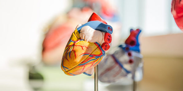 Medical Terminology of the Cardiovascular System: Part 2 - Product Image