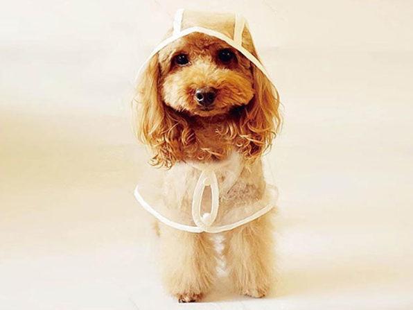 Clear Waterproof Pet Hoodie