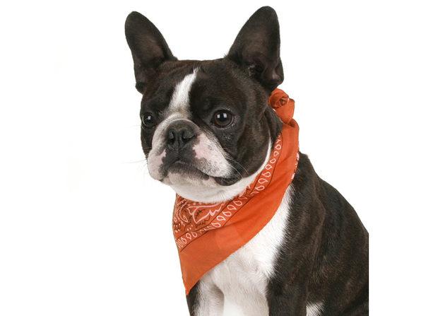 Mechaly Pack of 8 Paisley Cotton Dog Bandana Triangle Shape  - Fits Most Pets - Blue
